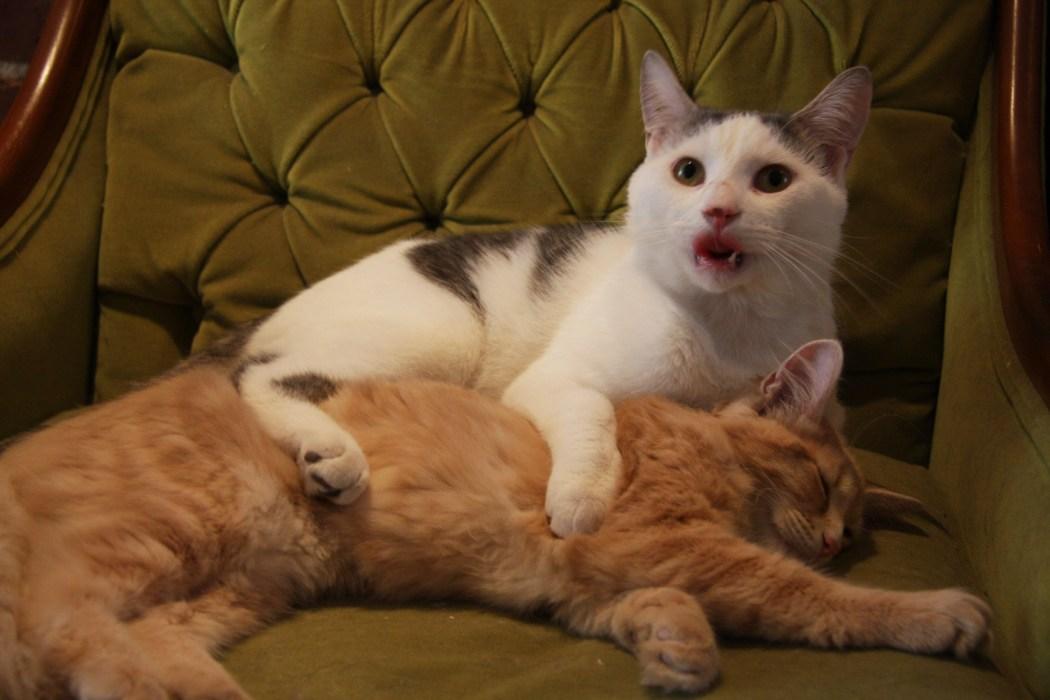 Cat Cafe MTL