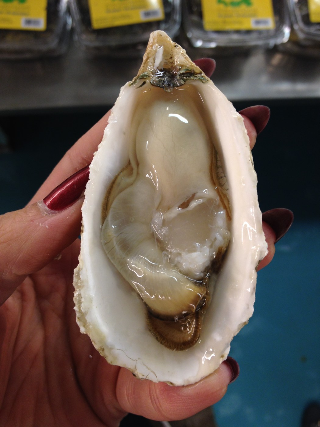 Kushi Oyster Raw Montreal wet seafood Montreal La Mer