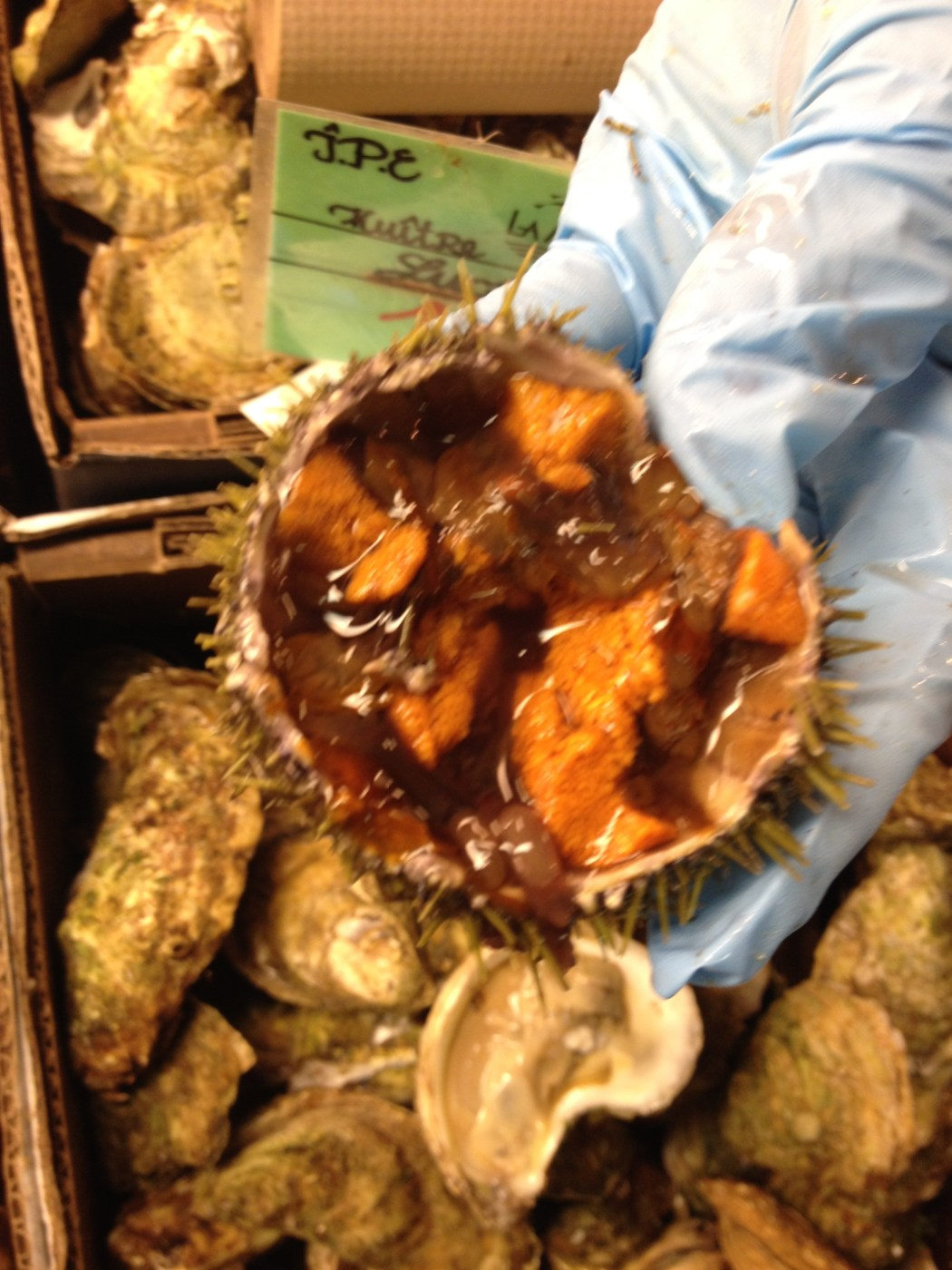Oursin Urchin Raw Montreal Sea Food