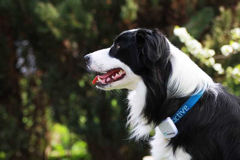 tractive pet GPS tracking Montreal tech Wearable Gift Ideas