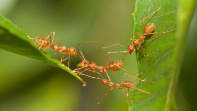 Photo of Belajar Tawakal dari Seekor Semut