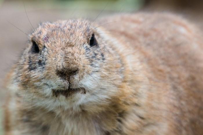 Tierfotografie im Hagenbecks Tierpark