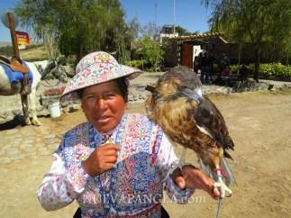 Mujer y su halcón, Arequipa