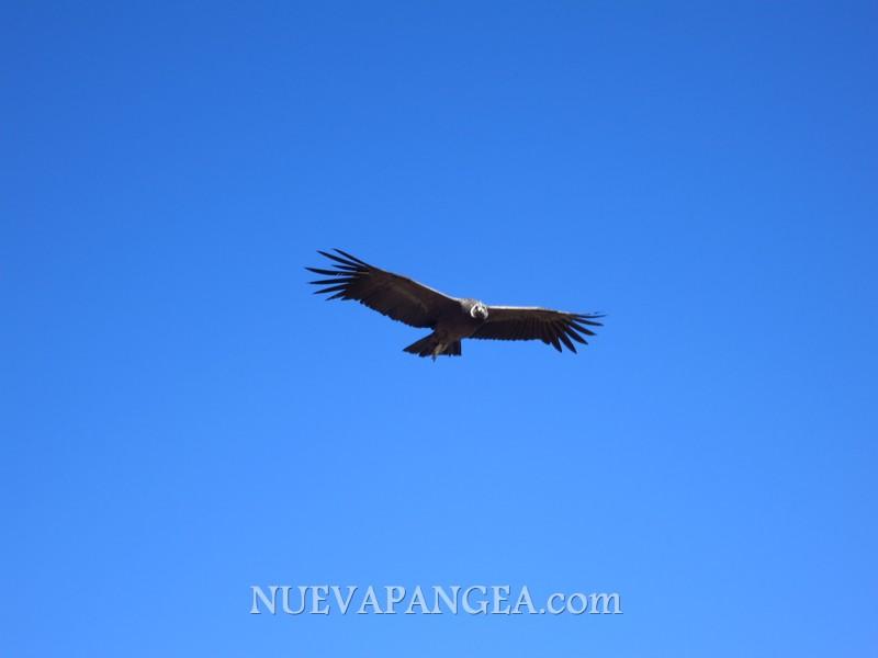 Arequipa y Perdidos en el Cañón del Colca