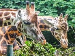 Zoológico de Viena, uno de los mejores del mundo