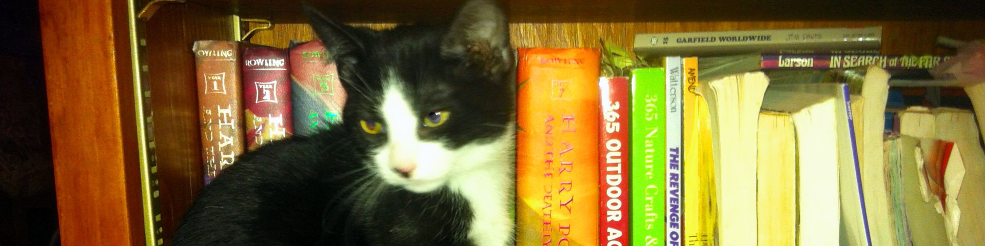 A black-and-white kitten sits on a bookshelf.