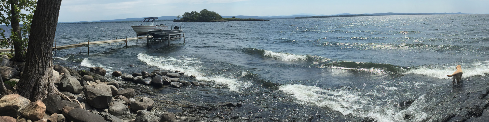 The waves roll in on Lake Champlain. A yellow Labrador Retriever stands in the waves; an island appears in the distance.