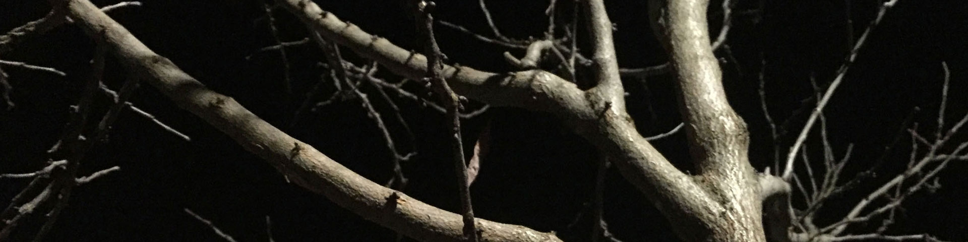 Pale white/grey tree branches stretch against the darkness.