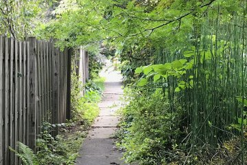 A straight sidewalk is bordered on the left by a fence and on the right by bamboo and other greenery.
