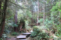 Tofino Vancouver Island British Columbia Kanada