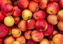 Брчко: Покренут поступак поводом скандала око извоза јабука