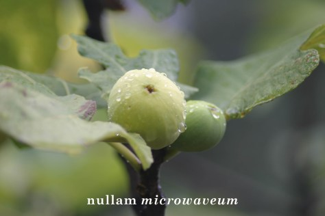 NullamMicrowaveum vijg LSG 2011