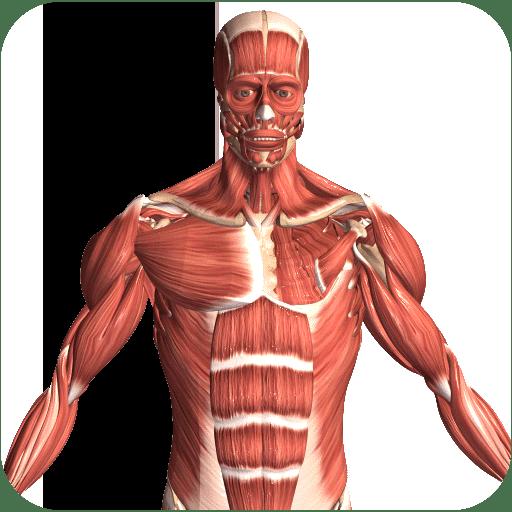 Visual Anatomy 2 4.0
