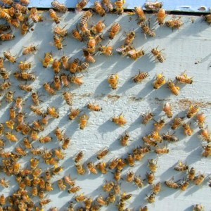 Bees all a-buzz