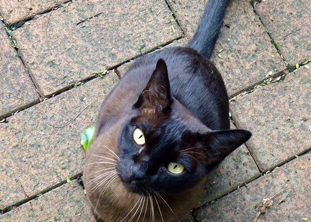 Chinno the cat