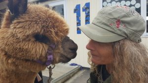 Photo of Annette nose to nose with alpaca
