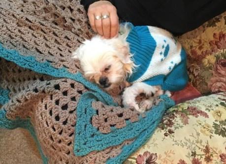 Photo of little dog