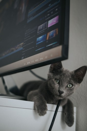 Photo of cat and computer