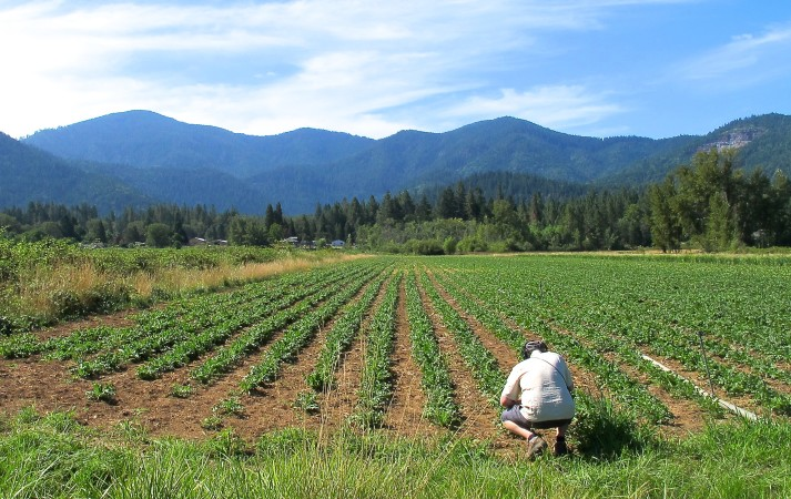 5 Most Popular Interviews on the herb industry by the Sustainable Herbs Project
