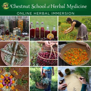 Find high quality herbal medicine by growing your own! Online Herbal Immersion Program Registration now open!