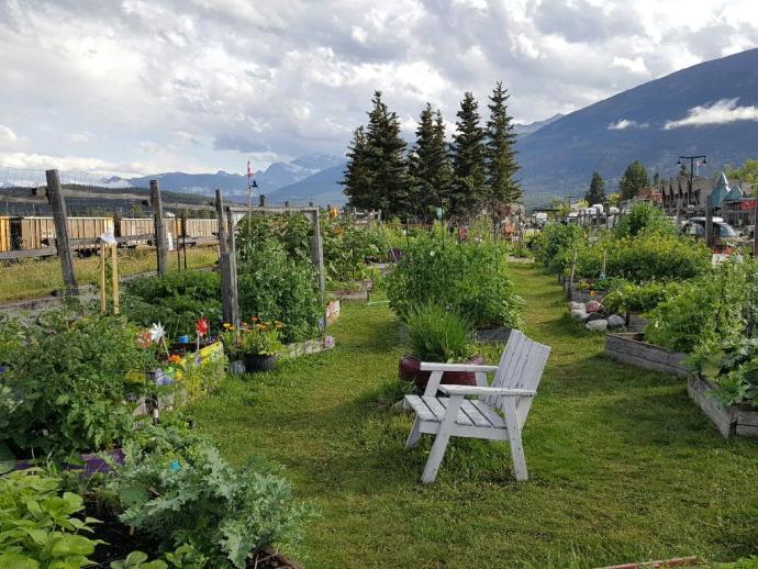 Community Garden Jasper, Alberta