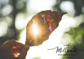Mars er i retrograd 2018 - Numerolog og psykolog Millicentt Rosamunde