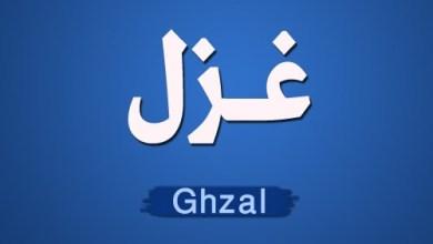 Photo of غزل: هاشم سادات