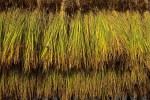 議員提案で長野市農業振興条例を制定