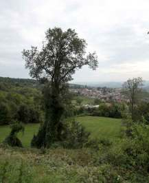 epernay dizy campagne