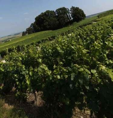 paysage vignes II à Ecueil dans le clip Pôle Emploi du rappeur français Nunsuko