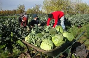 Arvaia organizza la festa dei cittadini-contadini! @ Bologna-Villa Bernaroli, Casteldebole