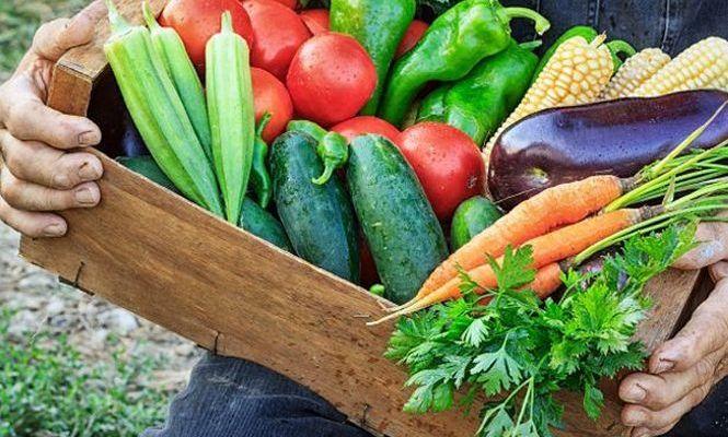 Agricoltura contadina in Sicilia a Fà la cosa giusta