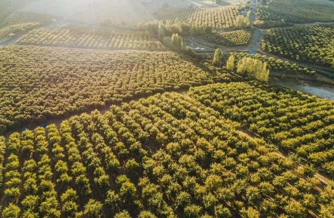 L'Italia contadina si ribella alle monocolture delle multinazionali