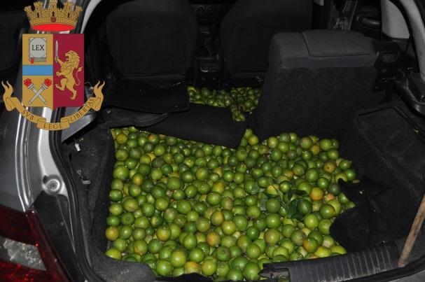 Sorpresi mentre caricavano limoni in auto: presi due catanesi a Lentini