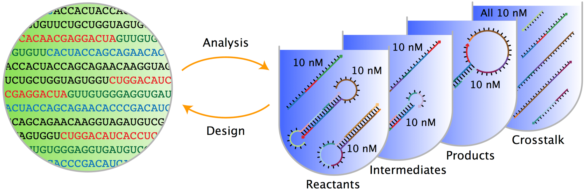 hight resolution of  interacting nucleic acid strands np testtubes