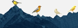 4 Birds Mountain Story of Ibrahim as