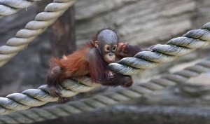 Hold tight to the rope - monkey