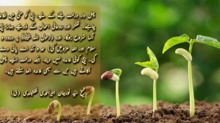 Urdu – ShaykhTalk # 4- Don't Be A Seed, Plant