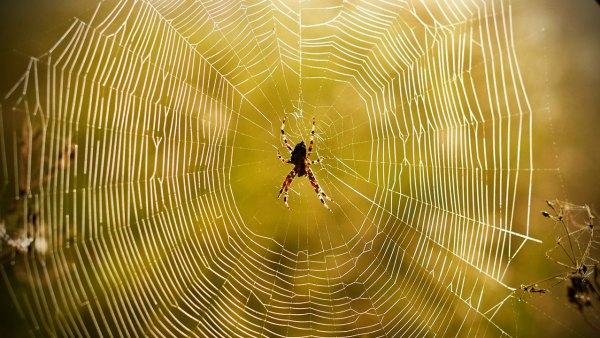 Örümcek Ağlarının Bitmeyen Sırları