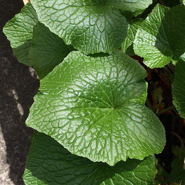 Above Ground Vegetable Garden
