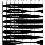 evergreen planting instructions soil pH graph