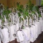 Allison's wedding seedling gift idea