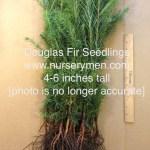 douglas fir seedlings for sale