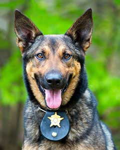 Police Dog Finds Nursing Home Resident