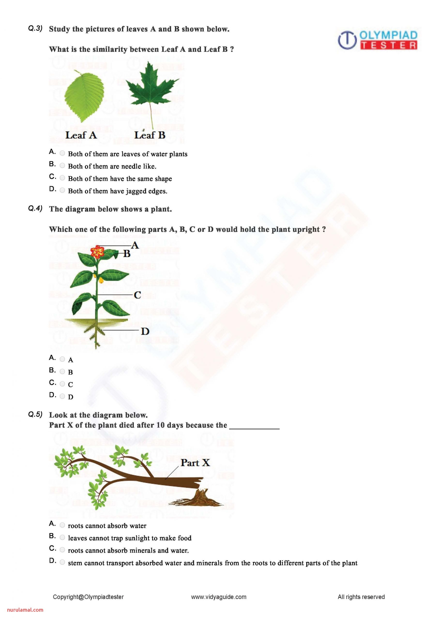 2nd Grade Science Worksheets Printable