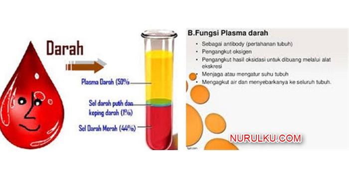Fungsi Plasma Darah Bentuk CiriCiri dan Mekanisme