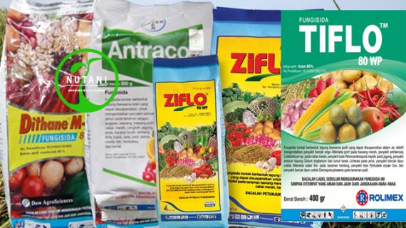 Review : Fungisida Antracol 70WP, Dithane M45 80WP, Ziflo 90 WP, Tiflo 80WP