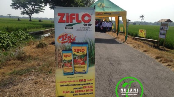 Kini Ziflo 3 Aksi, Saatnya Beralih ke Ziflo 90WP Plus Zn++
