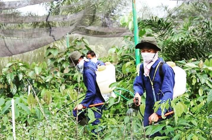 Kegiatan aplikasi penyemprotan pestisida