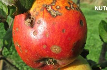 Tingkat Kekebalan Tanaman Terhadap Fungisida